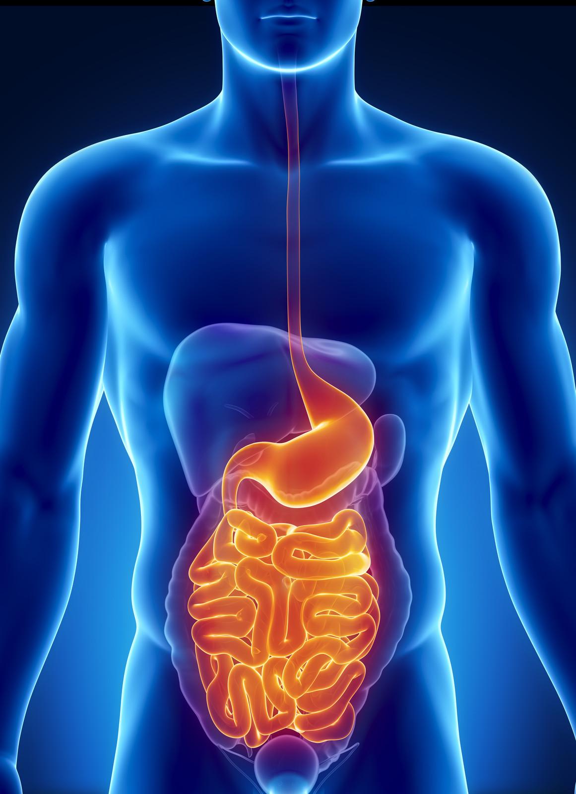 кишечник, болезни и оздоровление
