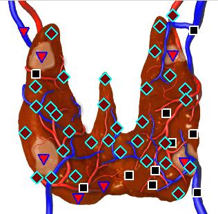 Эндокринная система 1