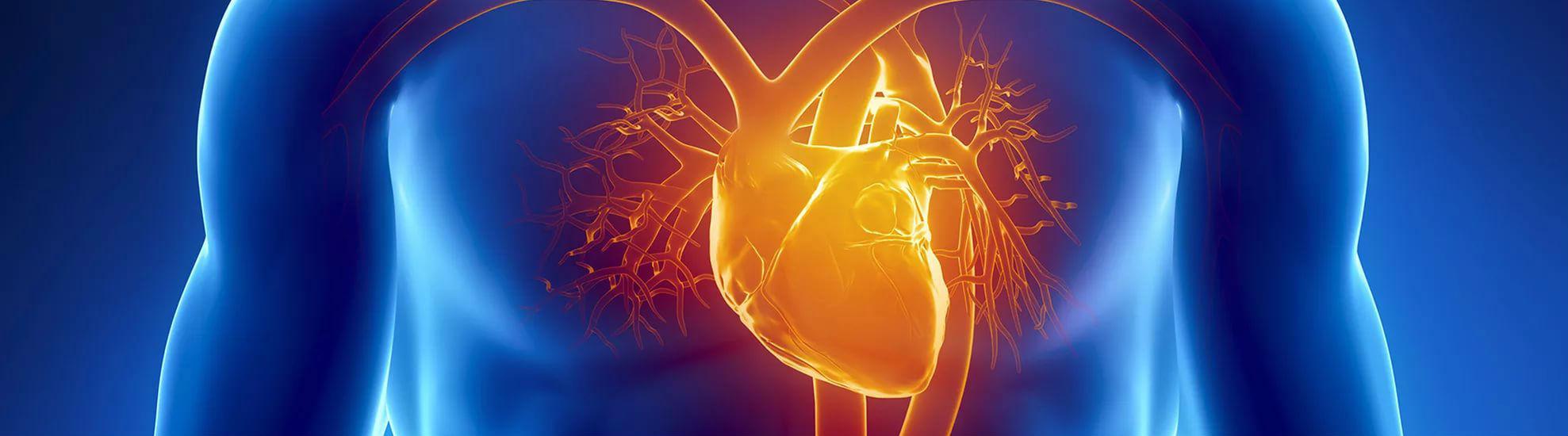 сердце, болезни и оздоровление
